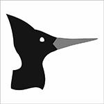 Chisel Beak